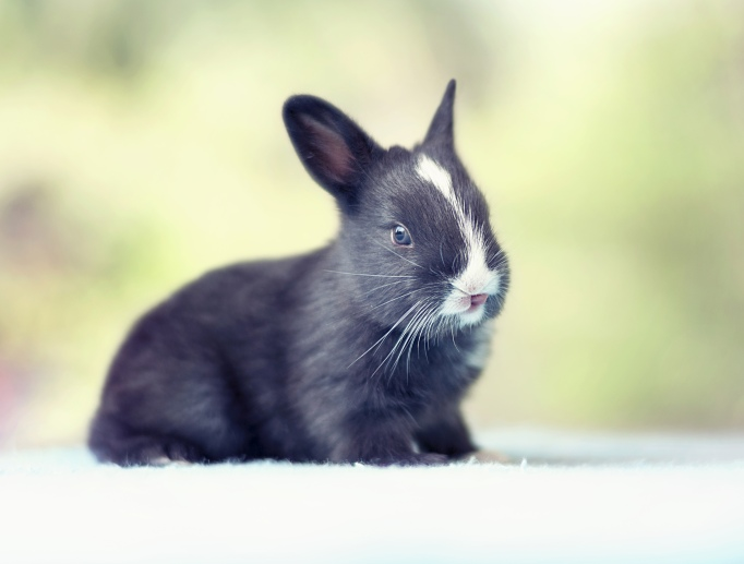Baby bunny day 15
