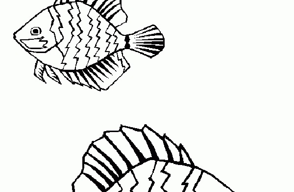 Sea creature coloring pages
