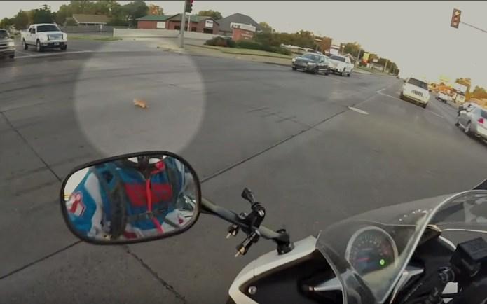 Lucky kitten saved by brave motorcyclist