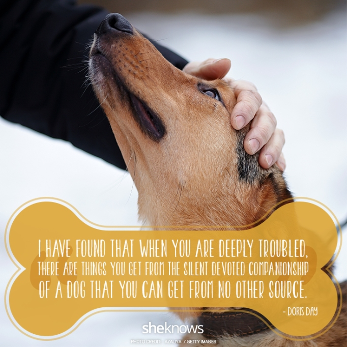 """""""I have found that when you are deeply troubled, there are things you get from the silent devoted companionship of a dog that you can get from no other source."""" —Doris Day"""