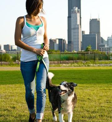 Must-know tips for rescue-dog adoption