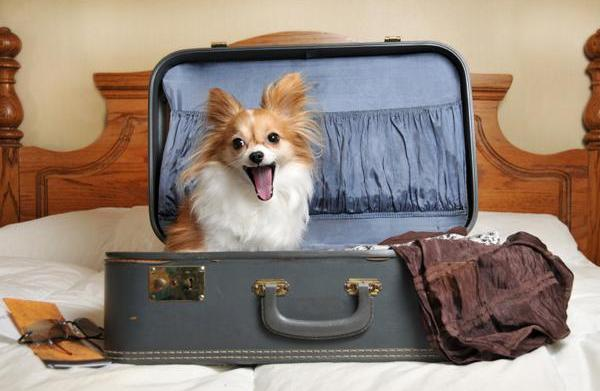 Pet-friendly holiday spots in Oz