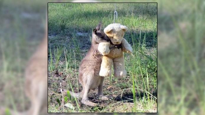 This adorable kangaroo is going viral