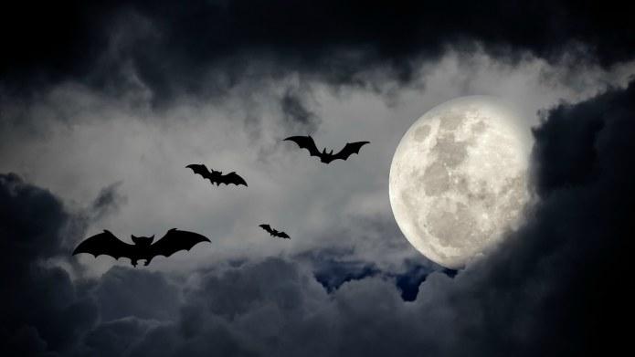 A DIY Bat Costume so Easy