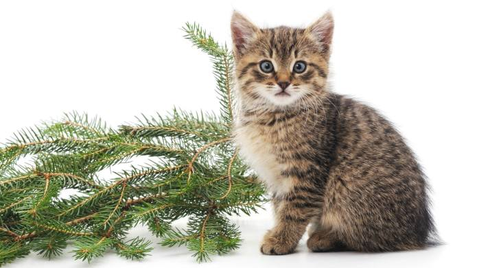 Got Pet Odor? Pine Is An