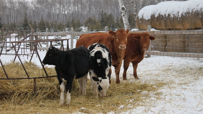 Mad cow disease investigation is ongoing,