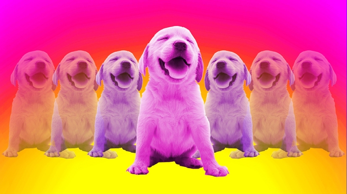 Smiling puppies on bright background