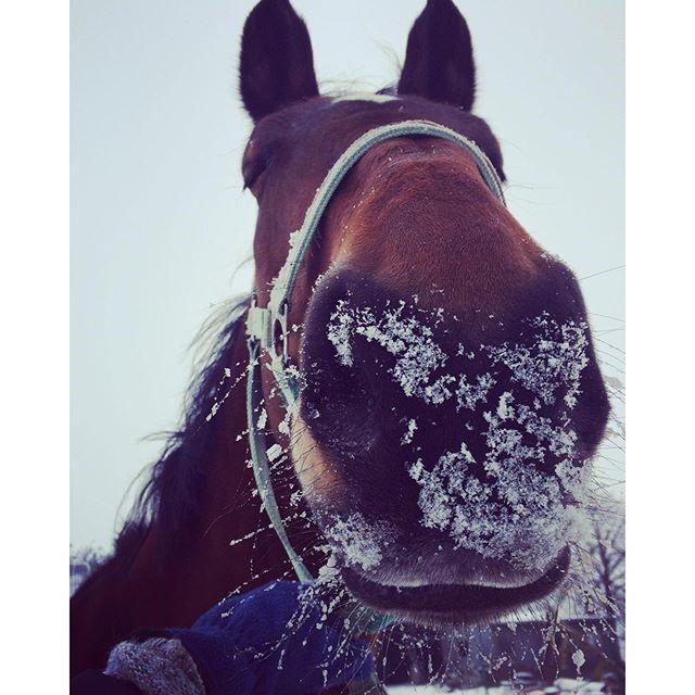 29 Horses having the best winter