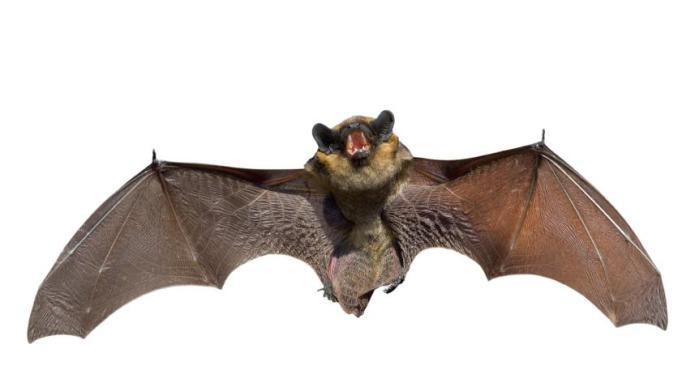 Bats in the Garden