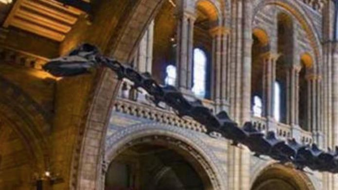 Change.org petition created to save Dippy