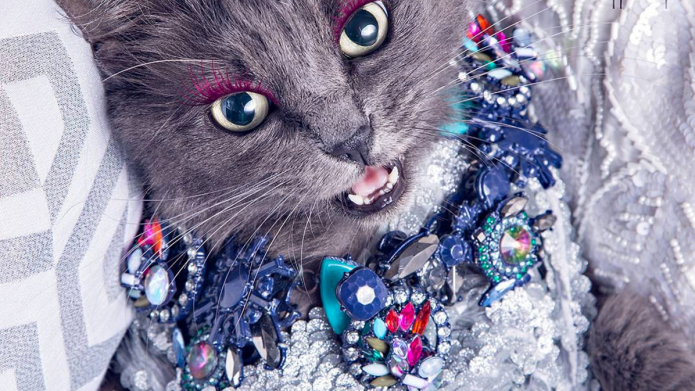 Blinged-out cat is basically every woman's
