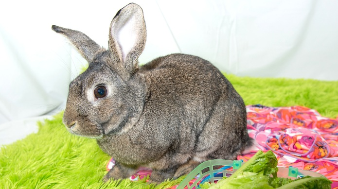 16 Reasons why pet bunnies are