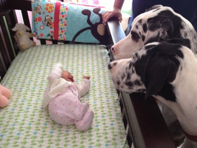 Two dogs watching crying baby in crib