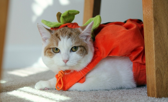 48 Cats in costumes that will