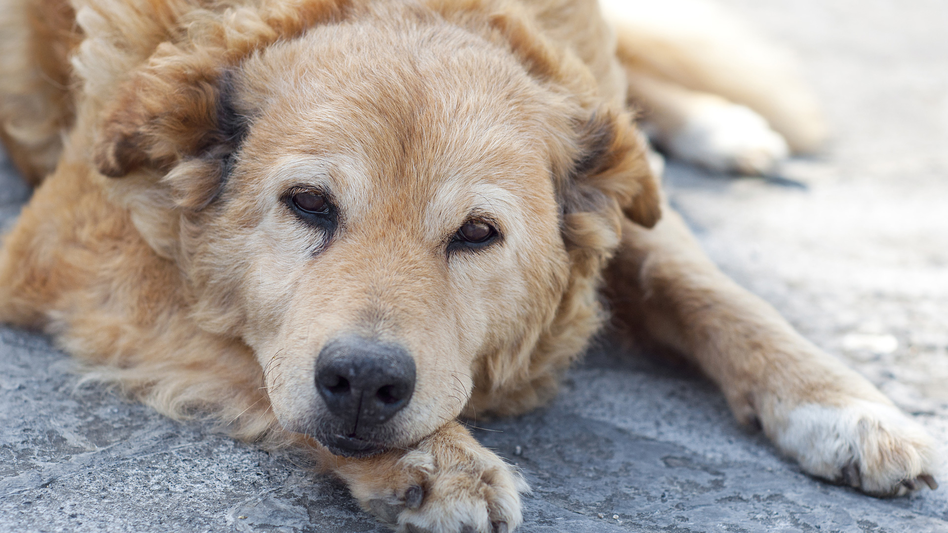 12 Tail Waggingly Great Gifts For The Senior Dog Sheknows