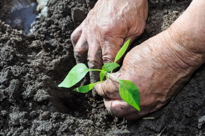 7 Terrible gardening tips to ignore