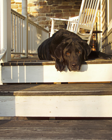Old dog on porch
