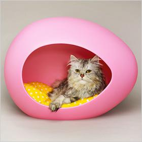 Cute accessories for cats