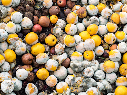 Heap of oranges and apples rotting