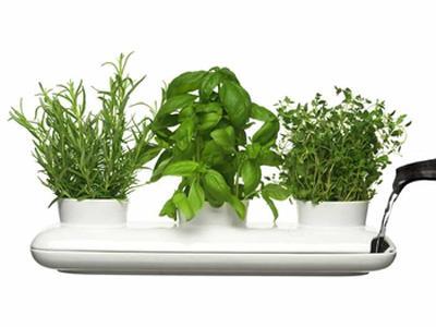 Tips for the stylish indoor gardener