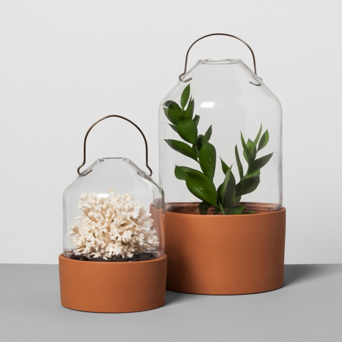 Glass & terracotta cloche magnolia