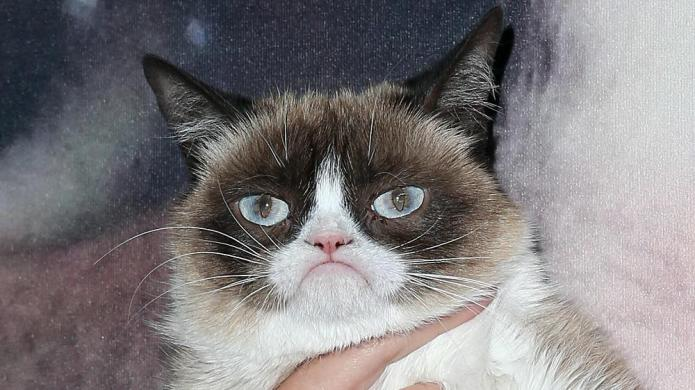 8 Times Grumpy Cat is our