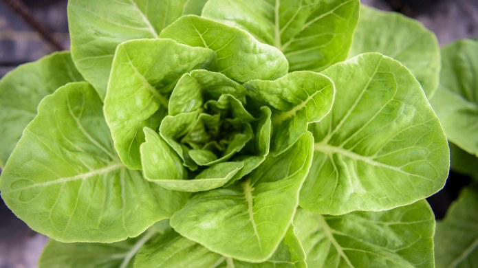 Yikes, This Romaine Lettuce Recall Is
