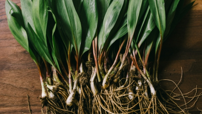 Ramps are here — now go