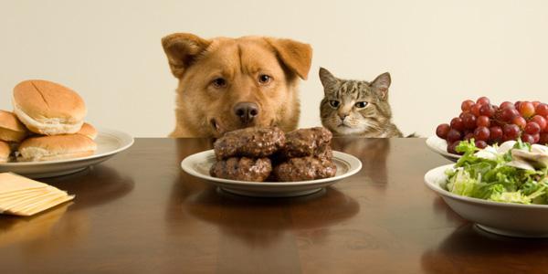 Pet-friendly family recipes