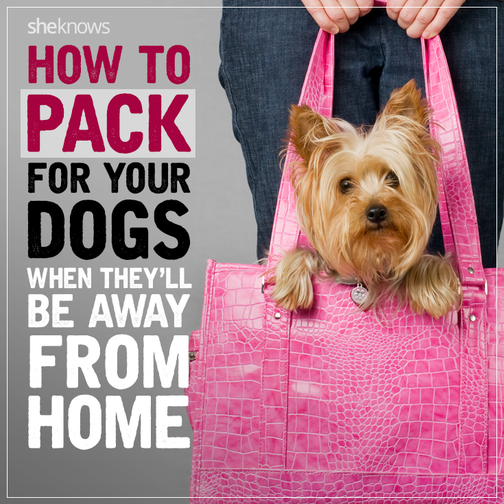 How to pack for your dog