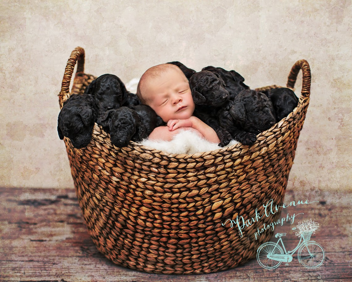 baby born on same day as puppies taking nap