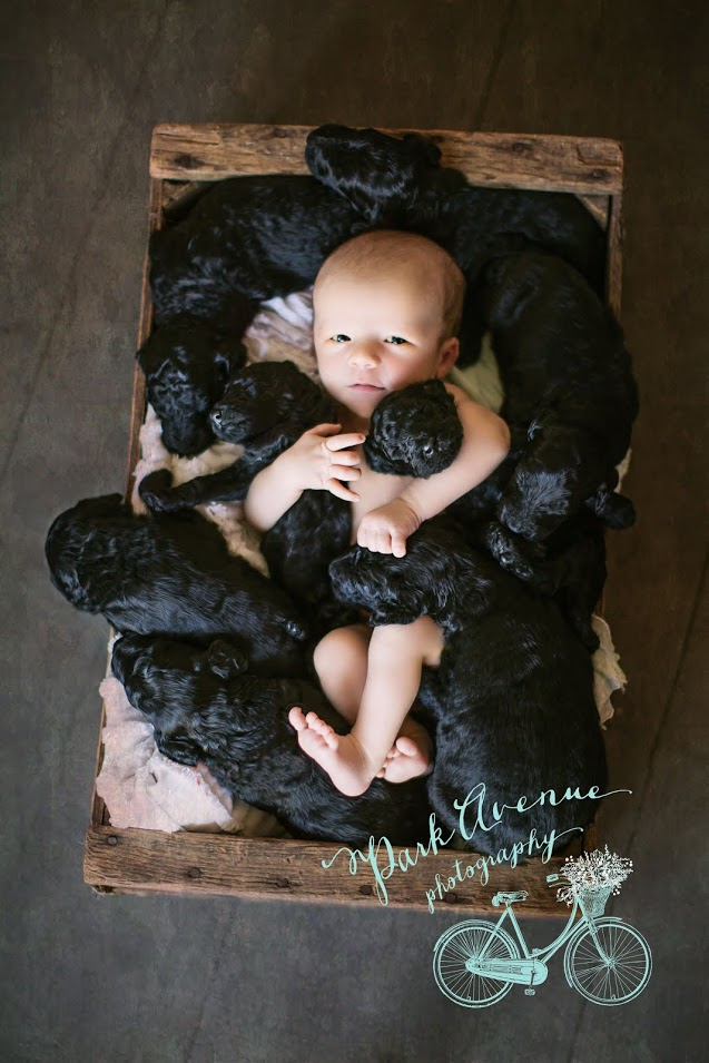 puppy and baby born the same day