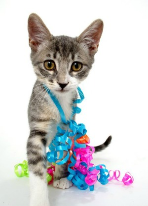 cute cat with ribbons around neck