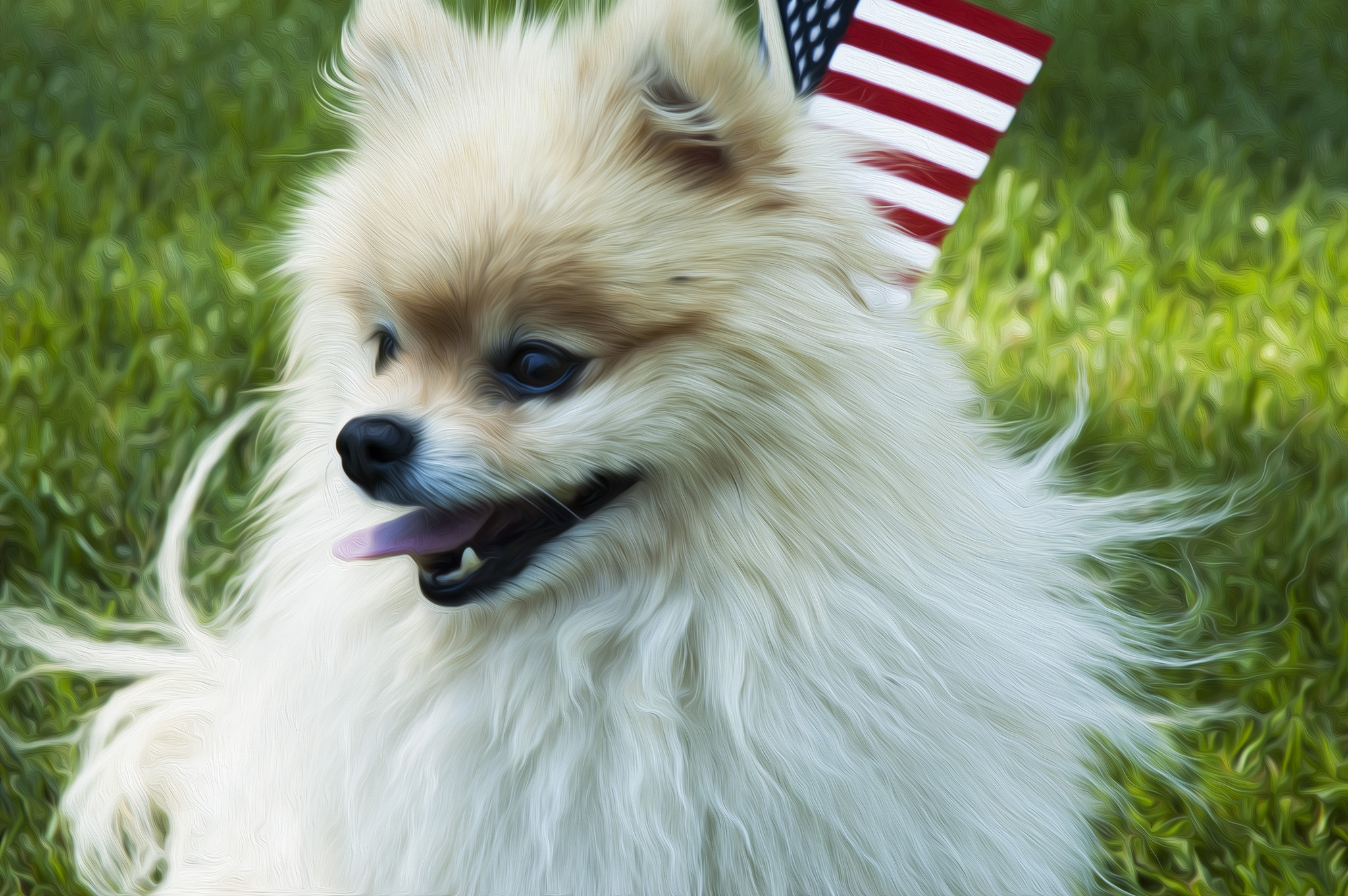 Pomeranian with an American flag