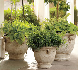 Pottery Barn's Brittany planters