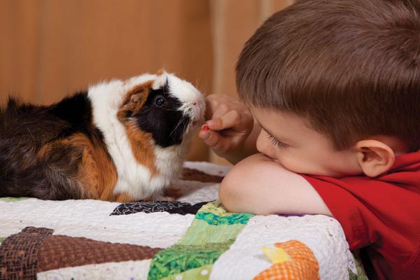 Guinea pig and boy