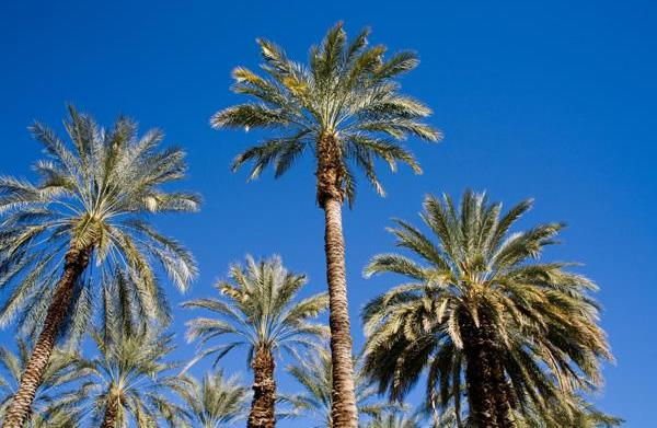 Frequent Flier: Travel guide to Palm