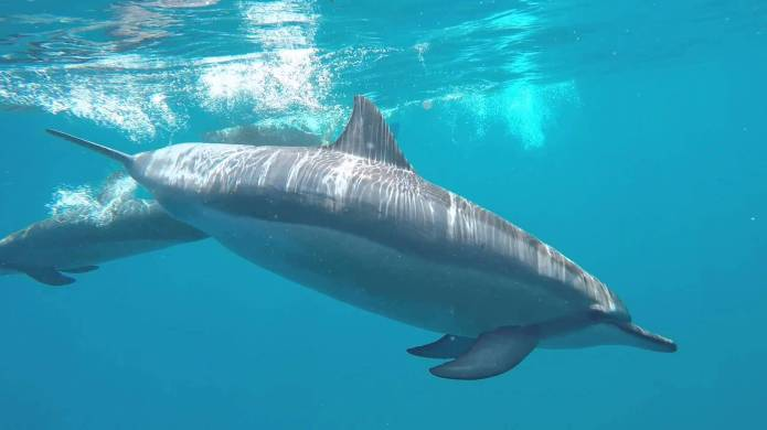 Pregnant woman plans dolphin-assisted water birth