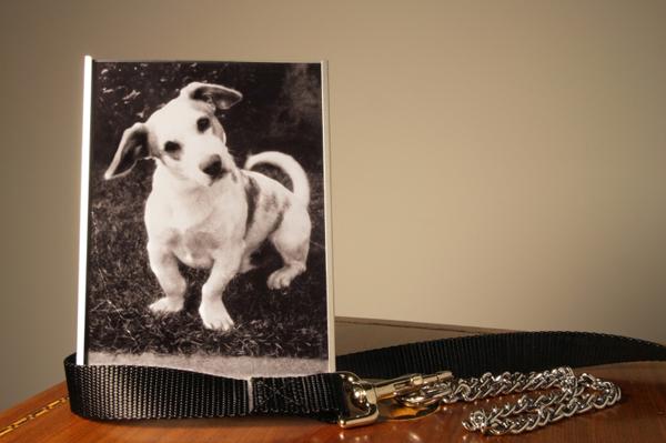 Dog in photo frame