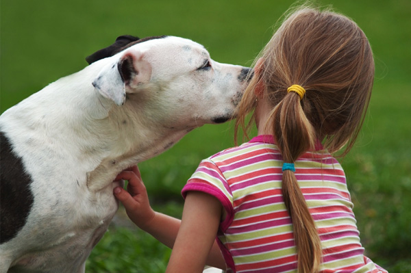 Pit bull kissing girl