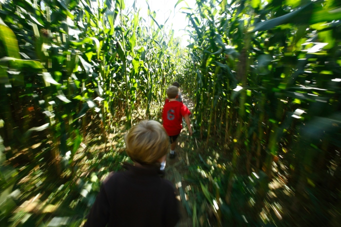 Kids running through a corn maze
