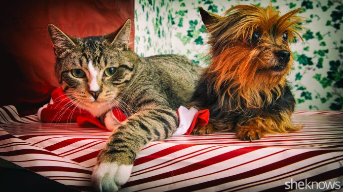Is pet adoption becoming a moneymaking