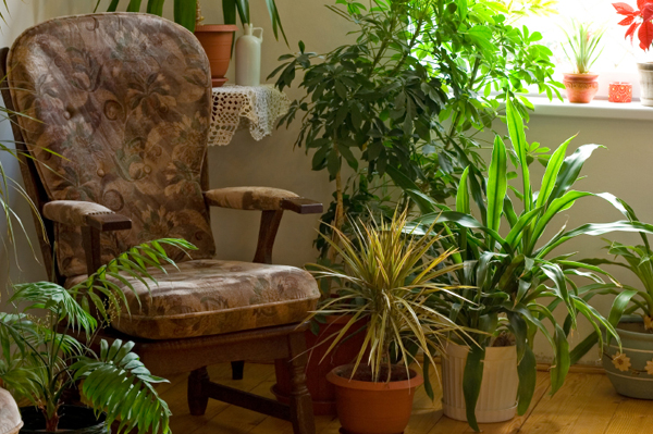 Plants Can Actually Help To Minimize The Air Quality Risks In Your Home By Removing Potent Chemicals Leaving Only Cleanest Indoors