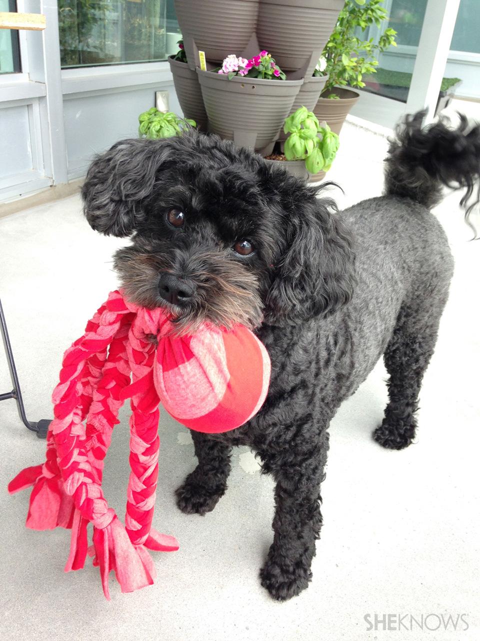 DIY ball & tug dog toy