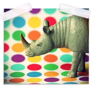 Polka Dot Rhino Fine Art Photography Print