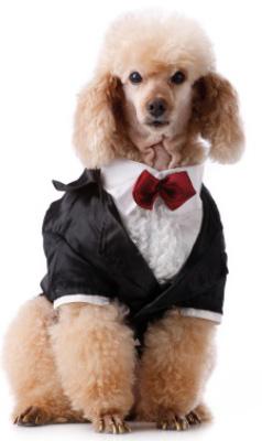 Doggie attendant