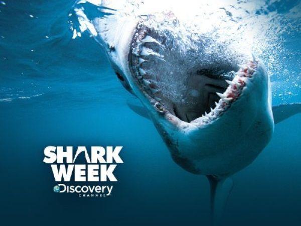 summer-tv-shark-week