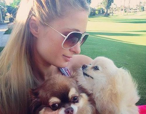 Paris Hilton's pampered pooches – SheKnows