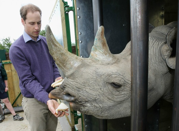 prince william pets rhino
