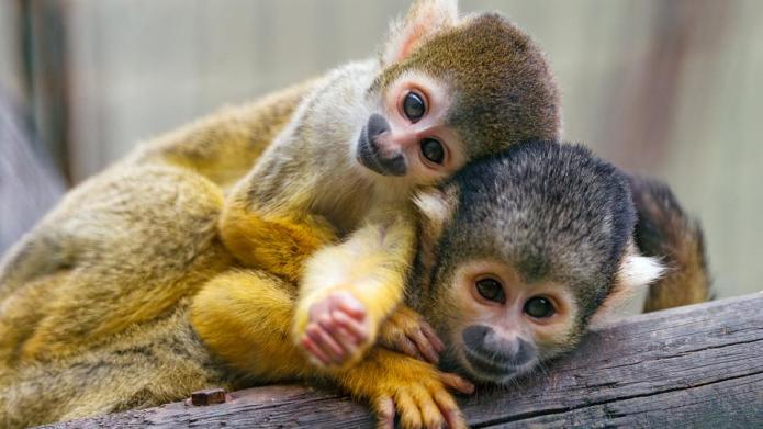 The most adorable animals 2014 had